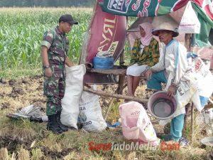 Babinsa Koramil 0815/05 Gedeg Serda Muhammad Syukron dan Serda Riswandi mendampingi petani pupuk tanaman jagung