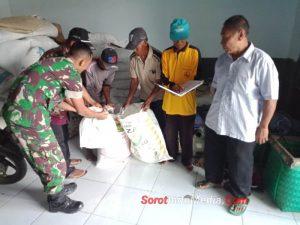 Babinsa Koramil 0815/06 Kemlagi Dampingi Distribusi Pupuk Untuk Petani Tembakau