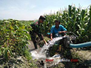 Babinsa Kintelan Koramil 0815/04 Puri Bantu Petani Pengairan Lahan Jagung
