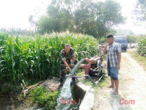 Babinsa Kenanten Pro Aktif Dampingi Petani Mengairi Tanaman Jagung