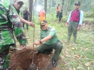 Selamatkan Bumi, Danramil 0815/16 Pacet Bersama LMDH Dan Pok Darling Tanam 1000 Pohon