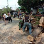 Paska Puting Beliung Koramil Kutorejo Bersama BPDB & Instansi Terkait Lakukan Pembersihan Material